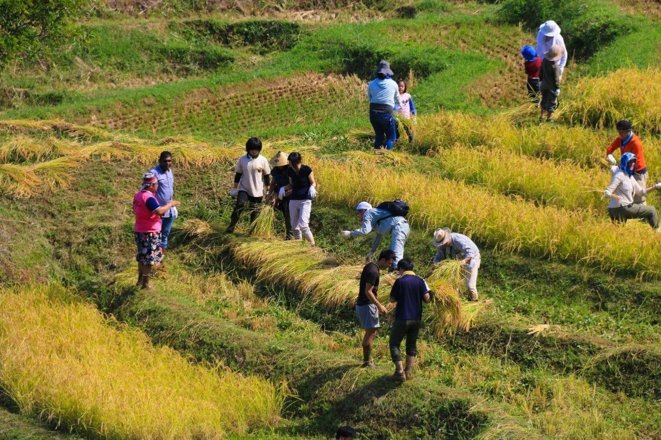 <div class='captionBox title'> 到石川縣能登體驗割稻與住進農家民宿</div>