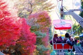 5 แหล่งชมใบไม้เปลี่ยนสีในคันโต (โอคุทามะ,ภูเขาทาคาโอะ,สวนซังเคเอ็น,หุบเขานากาสึ)