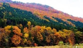 จุดชมฤดูใบไม้ร่วงของภูมิภาคโทโฮคุ7แห่ง (โออิระเซะ คะคุโนะดะเตะ ยะมะเดะระ นะรุโคะเคียว ฯลฯ )