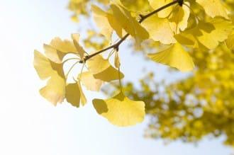 秋之絕景!東京賞楓賞銀杏的好去處10選【2018年版】