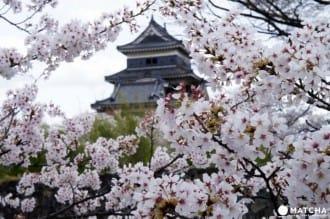 เที่ยวทั่วประเทศกับ 44 สถานที่ชมซากุระทั่วญี่ปุ่น (ฉบับเซฟเก็บไว้อ่าน)