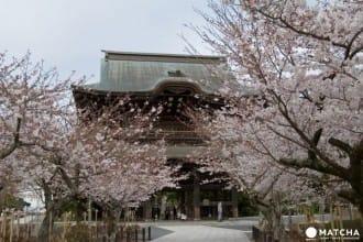 10 แหล่งชมซากุระสุดเจ๋งในคามาคุระ