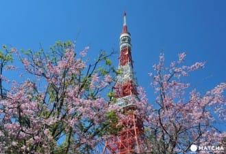 20 สถานที่ชมซากุระยอดนิยมในโตเกียว