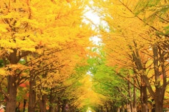 Hokkaido 2018: Ten Best Spots to View The Autumn Leaves