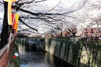 Enjoy Cherry Blossoms And Sweets At Meguro River