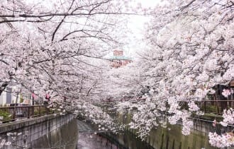 Inilah 5 Spot Melihat Sakura Tanpa Keramaian di Tokyo!