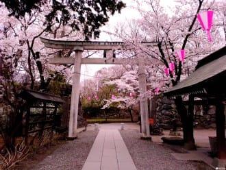 『長野』讓歷史徜徉在櫻花樹下!小諸懷古園賞櫻私房景點
