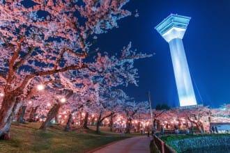 【北海道】錯過3月櫻花不要緊!北海道追晚櫻人氣景點5選