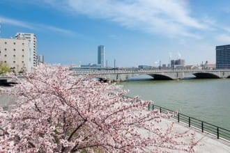Beautiful Even At Night! 4 Cherry Blossom Spots In Niigata