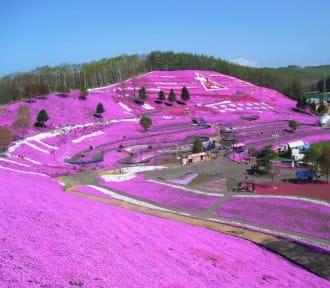 【北海道】五月才有的看!陶醉在芝櫻,鬱金香,油菜花的自然繽紛花海中