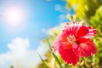 <div class='captionBox title'>旅遊前請確認!沖繩的氣候和旅遊的穿著打扮</div>