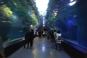 <div class='captionBox title'>EPSON Aqua Park SHINAGAWA - A Stylish, Urban Aquarium</div>