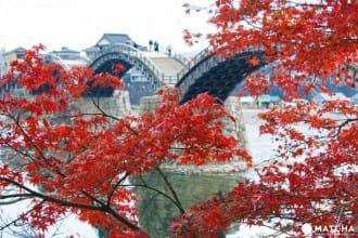 <div class='captionBox title'>【山口縣】錦帶橋與吉香公園,給你春的浪漫秋的美貌!</div>