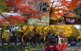 【橫濱】染上楓紅的橫濱!7大賞楓景點公開