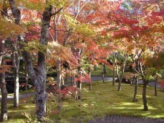 แผนเที่ยวฮาโกเนะฤดูใบไม้ร่วง 1 วันเพื่อสัมผัสศิลปะ สวน โรงน้ำชา และใบไม้เปลี่ยนสี