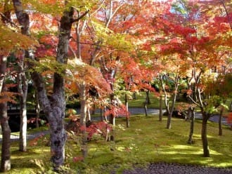 An Autumn Day Trip To Hakone: Art, Gardens, And Foliage