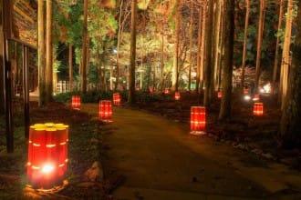 【京都嵐山】秋冬浪漫情懷,「嵐山花燈路」點亮迷人夜楓