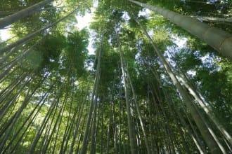 買一張小田急周遊券 跟著日劇電影走訪「鎌倉-江之島」