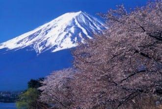 <div class='captionBox title'>與富士山、溫泉、城共賞!關東近郊賞花景點7選(2020年版)</div>
