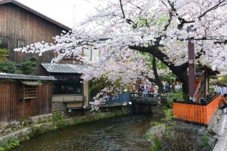จุดชมซากุระขึ้นชื่อในเกียวโต เดินชมซากุระบานจากย่านกิอง ถึงสวนสาธารณะมารุยามะ