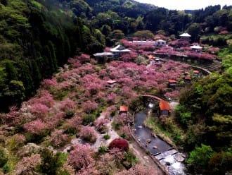 <div class='captionBox title'>大自然と桜の絶景にうっとり。九州地方の桜の名所10選</div>