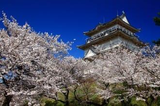 <div class='captionBox title'>富士山、温泉、城と見よう!関東近郊のお花見スポット7選(2019年版)</div>