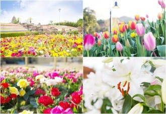 【香川】四国最大の花の楽園、四季の花々を独り占め「レオマリゾート」