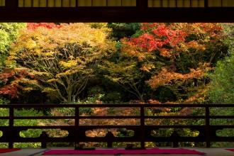 【2017年版】北九州秋景饗宴!福岡紅葉景點5選