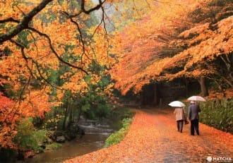 秋季旅行看這裡!值得一去的廣島紅葉觀賞景點 Top5【2018年版】