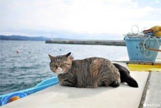 <div class='captionBox title'>Tashirojima Island Guide - Visit The Cat Island Of Miyagi</div>