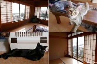 <div class='captionBox title'>『神奈川』貓奴必去!不只是貓咪咖啡廳的貓咪陪睡日式旅館</div>