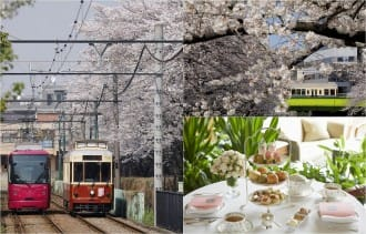 <div class='captionBox title'>Cherry Blossoms And Sweets! Hop On The Tokyo Sakura Tram In Spring</div>