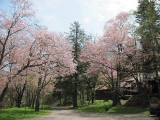 7 Top Cherry Blossom Spots In Hokkaido - See Sakura And Nature!
