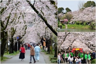 <div class='captionBox title'>【2019年】福岡在地人都去這5個櫻花景點打卡!</div>