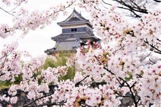 ซากุระ 44 จุดชมซากุระบานทั่วญี่ปุ่น ปี 2020