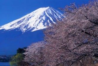 7 ที่ดูซากุระพร้อมภูเขาไฟฟูจิ ปราสาท ออนเซ็น รอบโตเกียว 2019