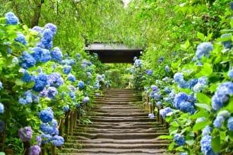 <div class='captionBox title'>『鎌倉』充滿和之美,被繡球花包圍的明月院</div>