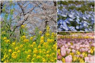 <div class='captionBox title'>【埼玉】你想賞的花這裡都可以盡情按下快門!國營武藏丘陵森林公園</div>