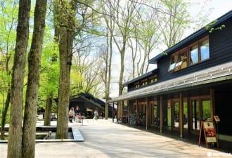 「輕井澤星野度假區 榆樹街小鎮」及周邊觀光8個推薦景點