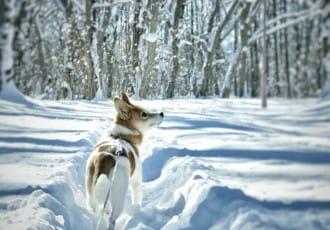 <div class='captionBox title'>北海道冬天沒想像中冷!?你不知道的北海道天氣冷知識</div>