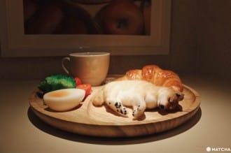<div class='captionBox title'>【京都】抱著柴犬MARU入睡做美夢!人氣網紅與微型藝術家打造療癒旅社「Marugott Hotel」</div>