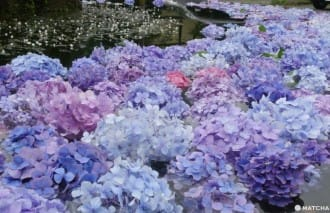 <div class='captionBox title'>【大阪】關西唯一的池中繡球花!大阪近郊的世外桃源「久安寺」</div>