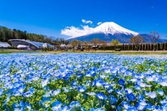 <div class='captionBox title'>在富士山腳下的「山中湖」可以做的8件事</div>