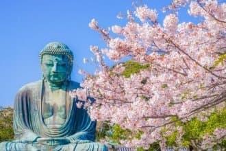 kamakura cherry blossoms