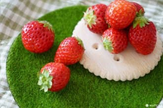 <div class='captionBox title'>無法抗拒的酸甜好滋味!帶來幸福的日本草莓品種和採草莓景點</div>
