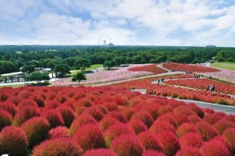 Save On Expenses! Transit Passes And Services For Short Trips In Japan