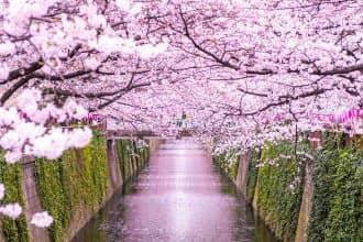 Japan's Cherry Blossoms in 2021 - Forecast and Best Spots