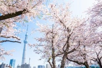 Tokyo's Cherry Blossoms: 20 Spots To See In 2021