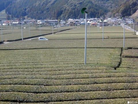 Farm Stay In Shizuoka - Enjoy Local Hospitality And Beautiful Sights