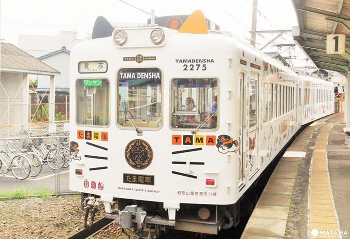 貓咪「小玉站長」迎接您!和歌山縣貴志川線超可愛的車廂們